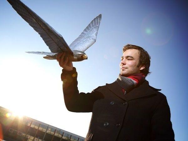 Robird : un drone oiseau imprimé en 3D pour faire fuir les étourneaux