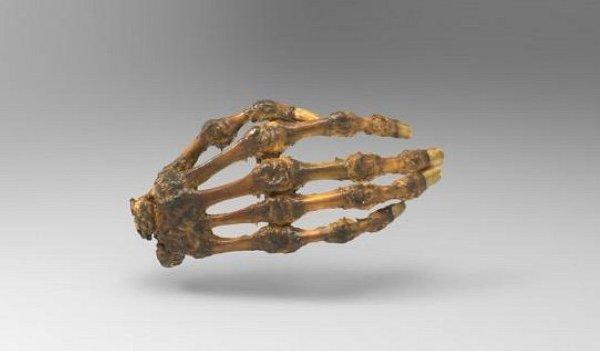 Threeding propose des modèles anatomiques