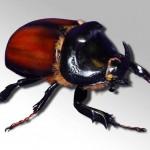 Des insectes imprimés en 3D plus vrais que nature !