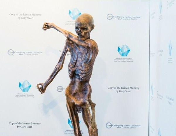 Momie Ötzi : sa réplique imprimée en 3D part en tournée