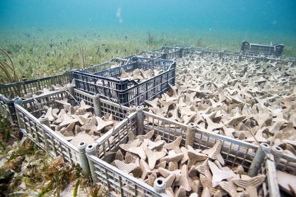 SECORE mise sur l'impression 3D pour restaurer les récifs coralliens