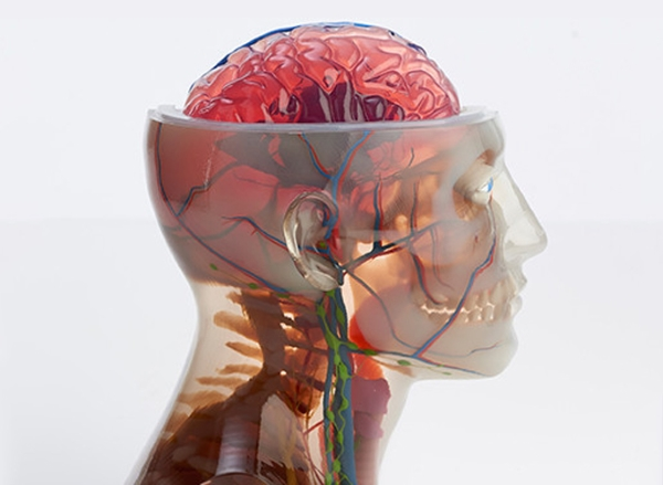 Filament, poudre, résine... 10 matériaux pour l'impression 3D médicale