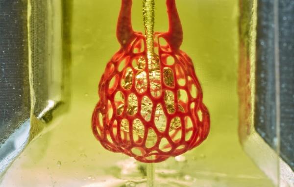 Quand des bioingénieurs américains donnent un nouveau souffle à la bio-impression 3D