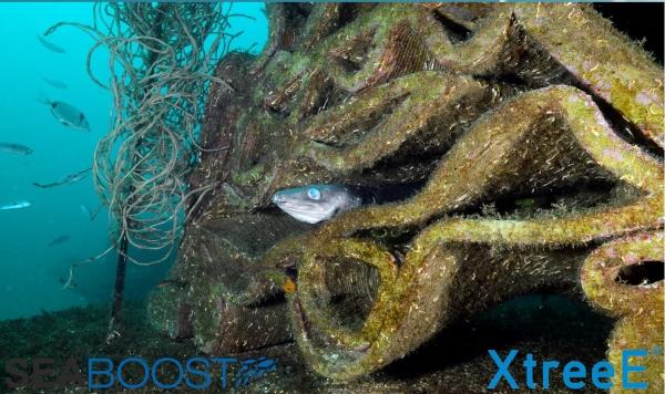 poisson caché dans un récif artificiel imprimé en 3D