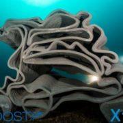 32 récifs artificiels imprimés en 3D immergés au large du Cap d'Agde